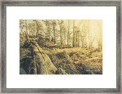 Saint Marys Pass State Reserve Forest Framed Print by Jorgo Photography - Wall Art Gallery