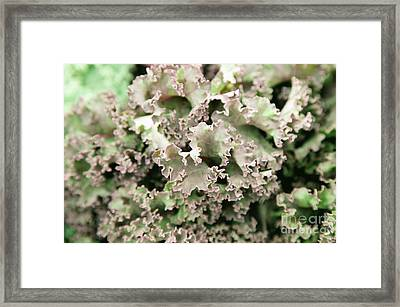 Salad Deconstructed Framed Print by Ian MacDonald