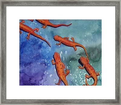 Salamanders Framed Print by Sharon Farber