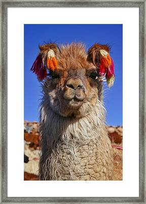 Salar De Uyuni Tour 18 Framed Print by Skip Hunt