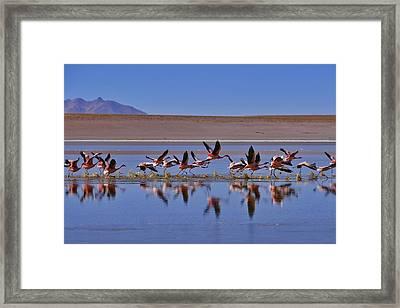 Salar De Uyuni Tour 24 Framed Print by Skip Hunt