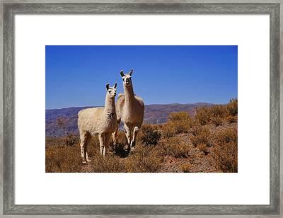 Salar De Uyuni Tour 5 Framed Print by Skip Hunt