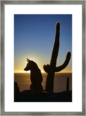 Salar De Uyuni Tour 58 Framed Print by Skip Hunt
