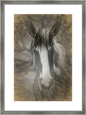 Salt River Stallion Framed Print by Teresa Wilson