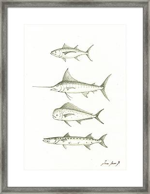 Saltwater Gamefishes Framed Print by Juan Bosco