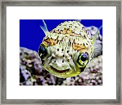 Saltwater Porcupinefish Framed Print by Marvin Blaine