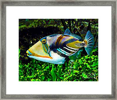Saltwater Triggerfish Framed Print by Marvin Blaine