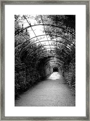Salzburg Vine Tunnel - By Linda Woods Framed Print by Linda Woods