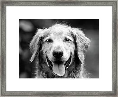 Sam Smiling Framed Print by Julie Niemela
