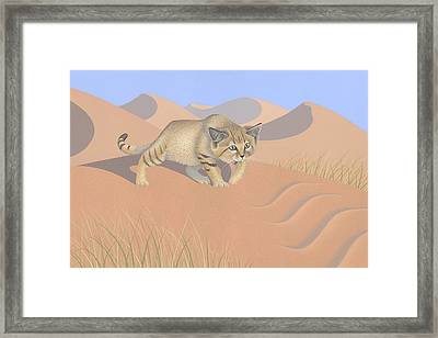 Sand Cat Framed Print by Nathan Marcy
