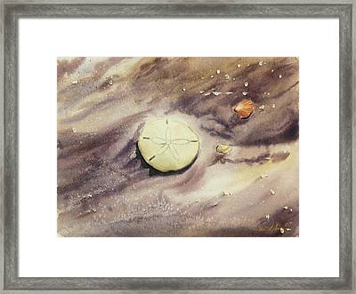 Sand Dollar Framed Print by Lane Owen