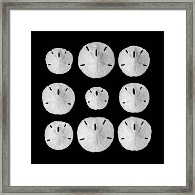 Sand Dollars Framed Print by Jim Hughes