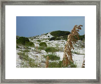 Sand Dunes Of Pcb Framed Print by Anthony Allen