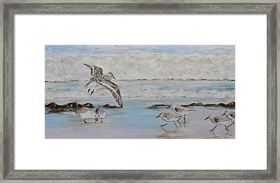 Sanderlings Framed Print by Mike Paget
