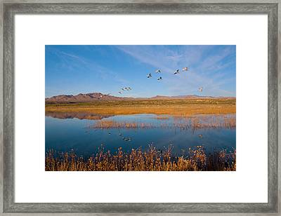 Sandhill Cranes In Flight Framed Print by Panoramic Images