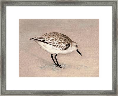 Sandpiper On Sand Framed Print by Heather Mitchell
