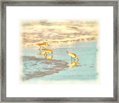 Sandpipers Along The Shoreline Framed Print by Betsy Foster Breen
