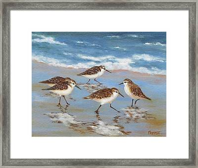 Sandpipers Framed Print by Barrett Edwards