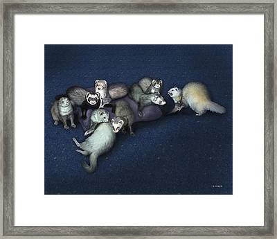 Sandy's Ferrets Framed Print by Barbara Hymer