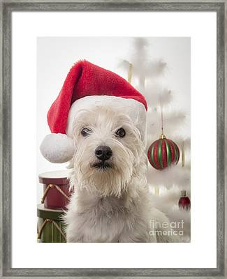Santa Dog Is Coming To Town Framed Print by Edward Fielding