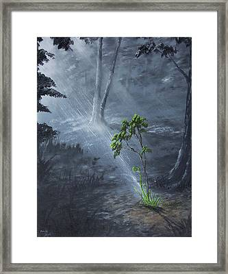 Sapling Framed Print by Adam Morris
