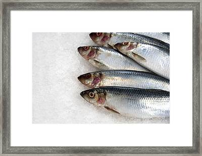 Sardines On Ice Framed Print by Jane Rix
