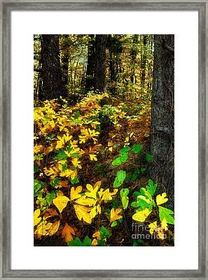 Sassafras Forest II Framed Print by Dan Carmichael