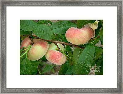 Saturn Donut Peaches Framed Print by Inga Spence