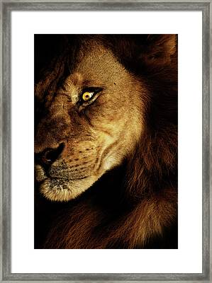 Savage Framed Print by Andrew Paranavitana