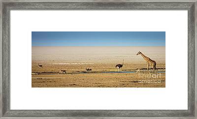 Savanna Life Framed Print by Inge Johnsson