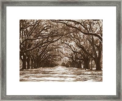 Savannah Sepia - Glorious Oaks Framed Print by Carol Groenen