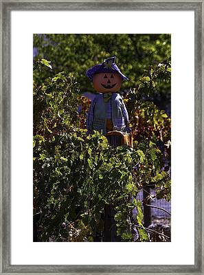 Scarecrow In The Vineyards Framed Print by Garry Gay