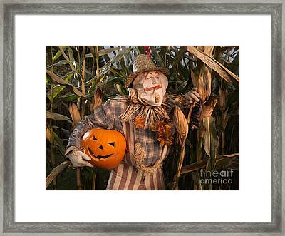 Scarecrow With A Carved Pumpkin  In A Corn Field Framed Print by Oleksiy Maksymenko