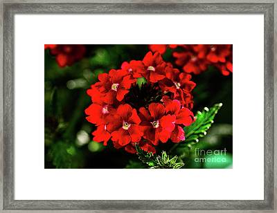 Scarlet Surprise By Kaye Menner Framed Print by Kaye Menner