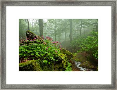 Scent Of Spring Framed Print by Evgeni Dinev