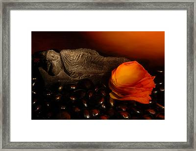 Scented Dreams Framed Print by Phyllis Clarke