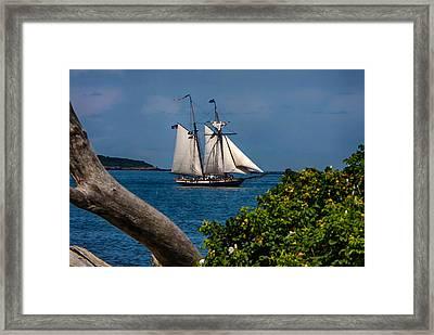 Schooner Sailing Out Of The Harbor Framed Print by Jeff Folger