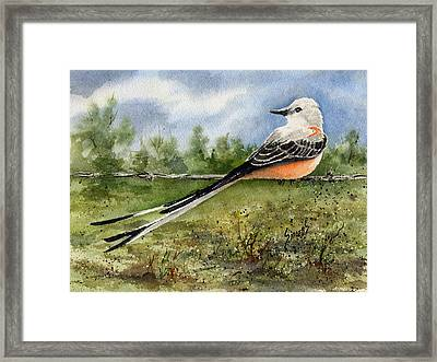 Scissor-tail Flycatcher Framed Print by Sam Sidders