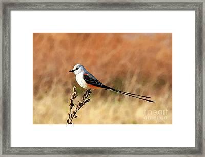 Scissor-tailed Flycatcher Framed Print by Betty LaRue