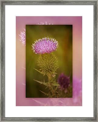 Scotch Thistle Framed Print by Holly Kempe