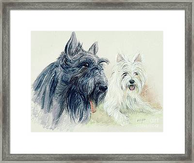 Scottie And Westie Framed Print by Morgan Fitzsimons