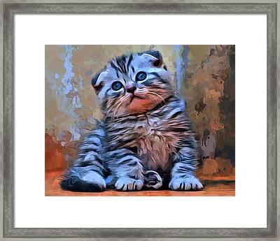 Scottish Fold Kitten Framed Print by Scott Wallace