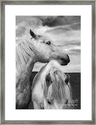 Scottish Horses Framed Print by Diane Diederich