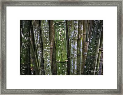 Scratched Bamboo Framed Print by Edward Fielding