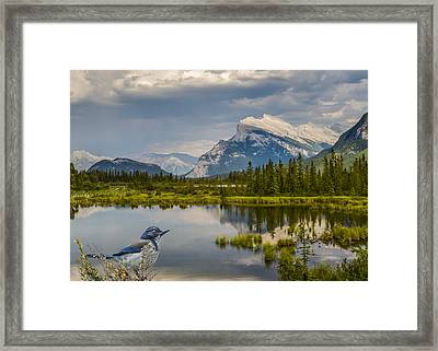 Scrub Jay In The Mountains Framed Print by Patti Deters