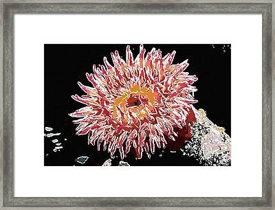 Sea Anemone  Framed Print by Lanjee Chee