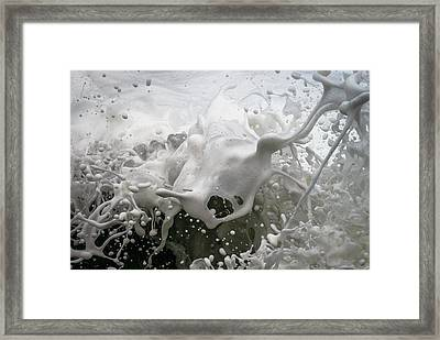 Sea Champs Framed Print by Cameron Howard