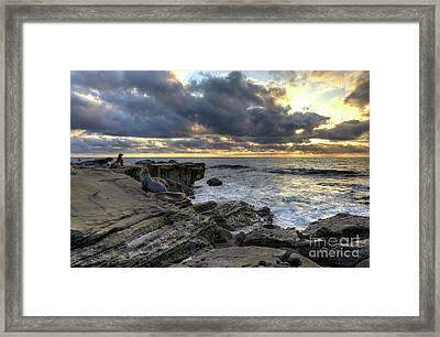 Sea Lions At Sunset Framed Print by Eddie Yerkish