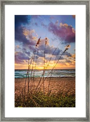 Sea Oats Framed Print by Debra and Dave Vanderlaan