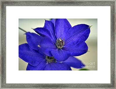Sea Of Blue Framed Print by Clayton Bruster